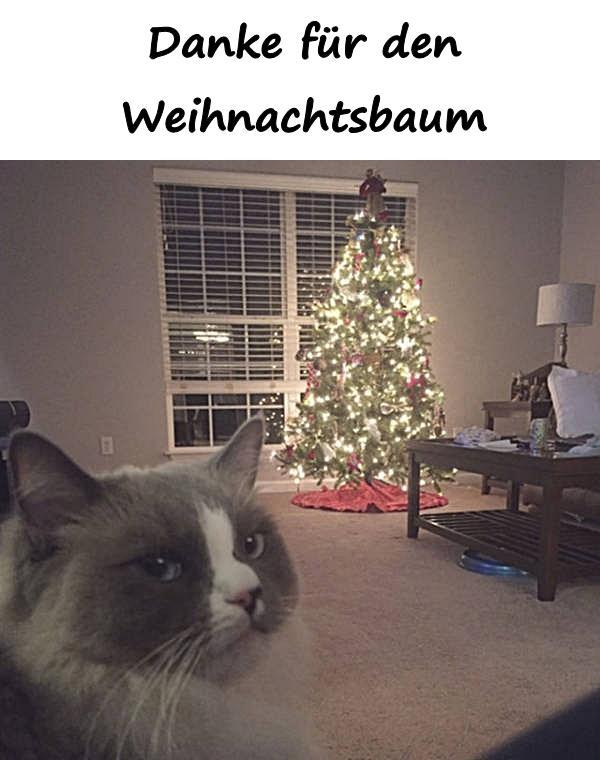 Lustige Tannenbaum Sprüche.Zitate Sprüche Memes Deutsch Debeste Lustig Witze Lustige