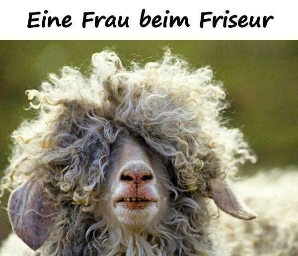 Friseur Humor Lustige Bilder Arsch Lustige Spruche Xdpedia
