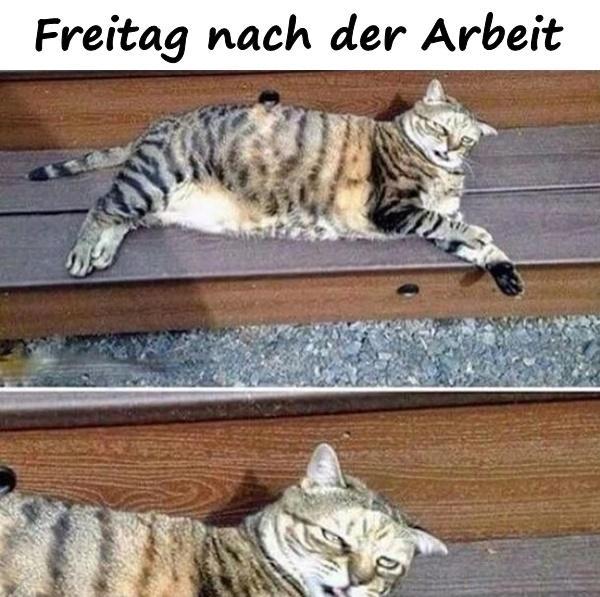 Freitag Lustige Lustige Spruche Meme Humor Beste Xdpedia De