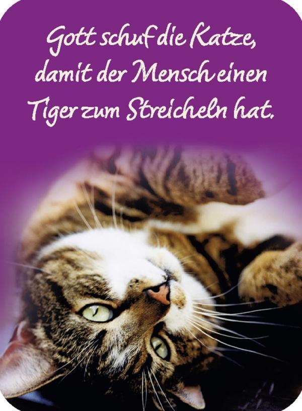 Spruch Zitat Meme Liebe Tiger Sprüche Aphorismen