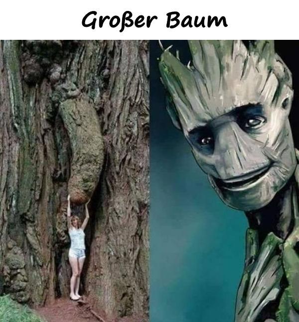 Beste Baum Meme Lustige Spruche Humor Lustige Bilder