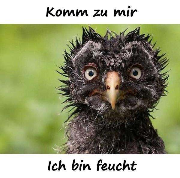 Ich bin feucht - xdPedia.de (1307)