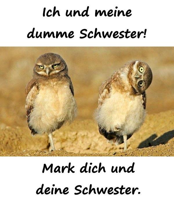 Dummheit Lustige Sprüche Beste Meme Humor Lustige Xdpedia