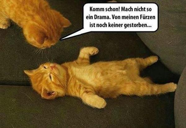 Lustige Spruche Meme Lustige Katzen Lustige Bilder Xdpedia