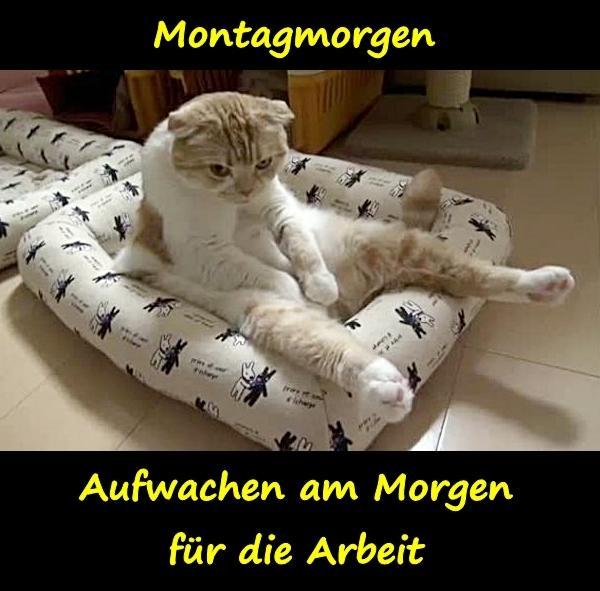 lustige montag morgen sprüche Montagmorgen   xdPedia.de (541) lustige montag morgen sprüche