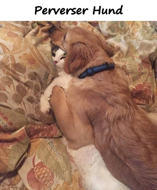 Hunde Lustige Spruche Die Besten Hunde T 2019 02 19