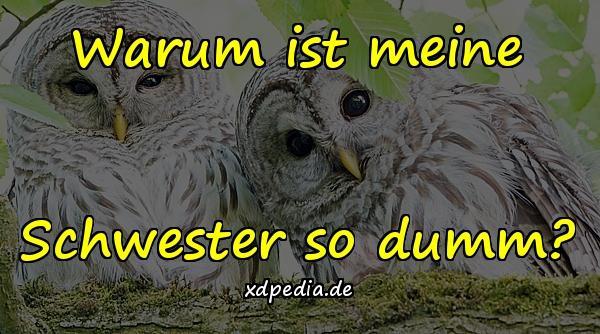 Humor Schwestern Meme Lustige Spruche Geschwister Xdpedia De