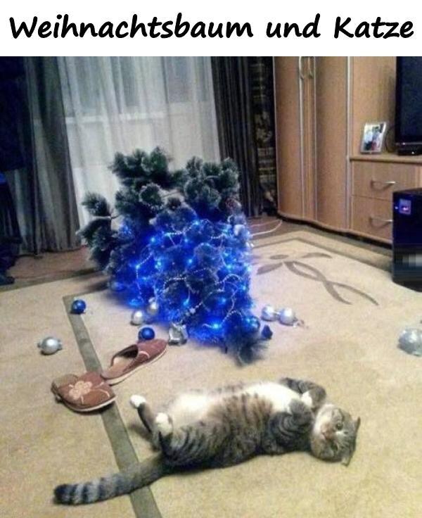 Lustige Tannenbaum Sprüche.Weihnachtsbaum Und Katze Xdpedia De 2121