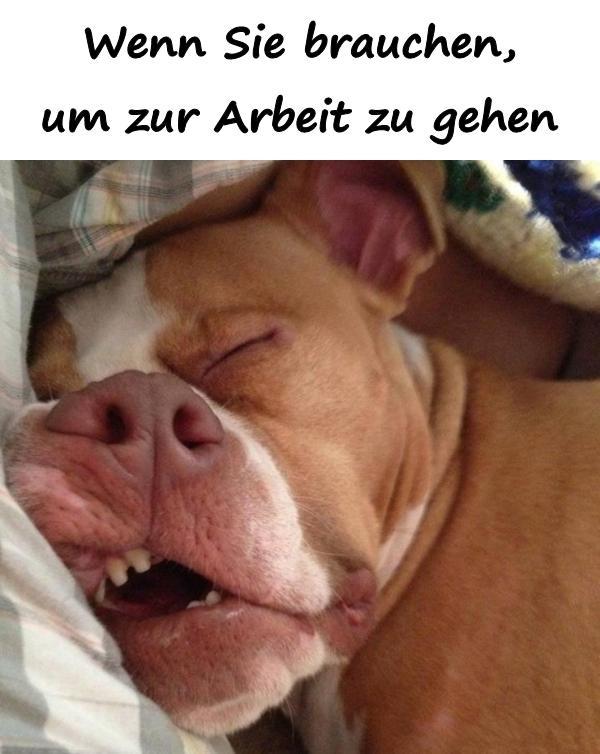 Lustige Lustige Spruche Arbeit Morgen Beste Humor Meme