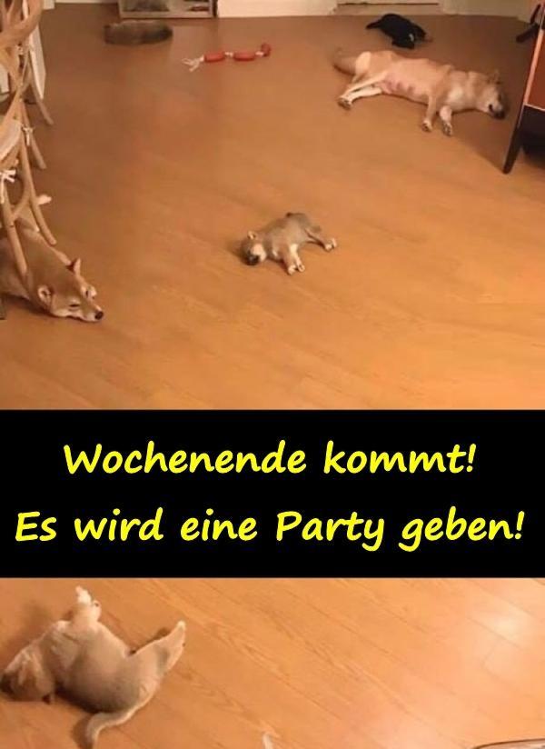 Party Bild Lustig