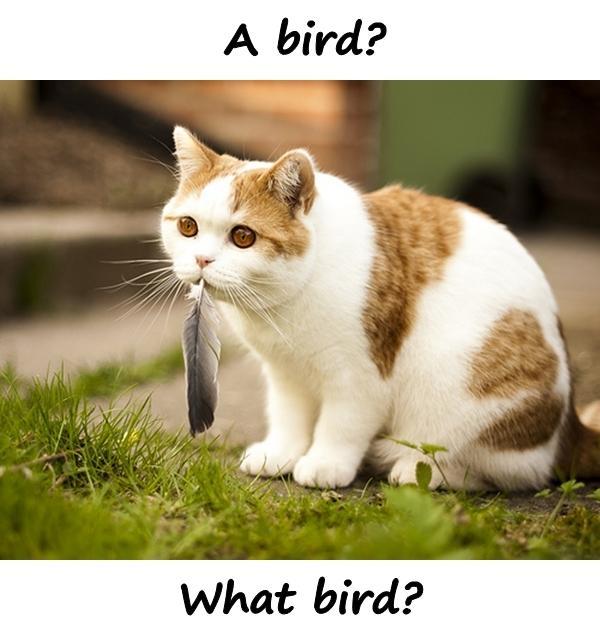 A bird? What bird?
