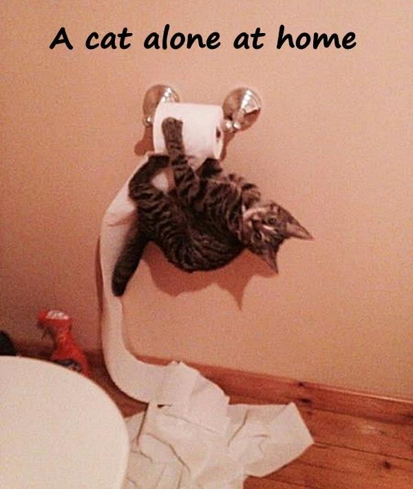 A cat alone at home