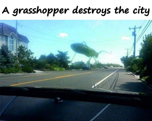 A grasshopper destroys the city