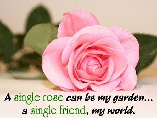 A single rose can be my garden... a single friend, my world.