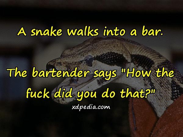 A snake walks into a bar. The bartender says