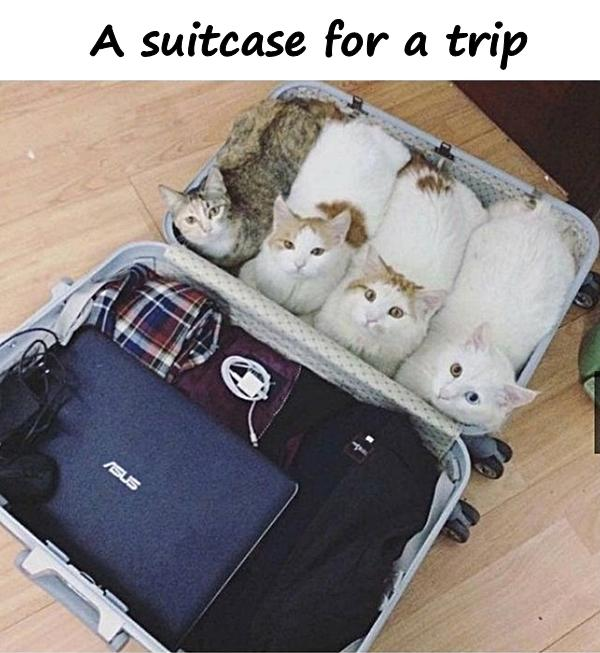 A suitcase for a trip
