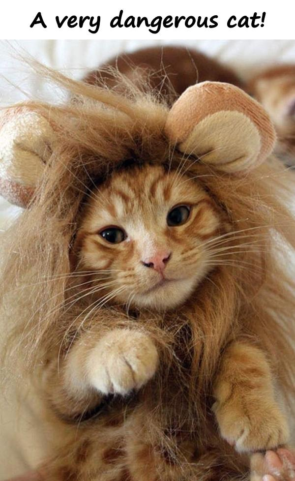 A very dangerous cat!