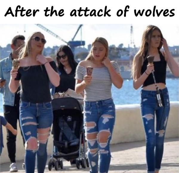 After the attack of wolves