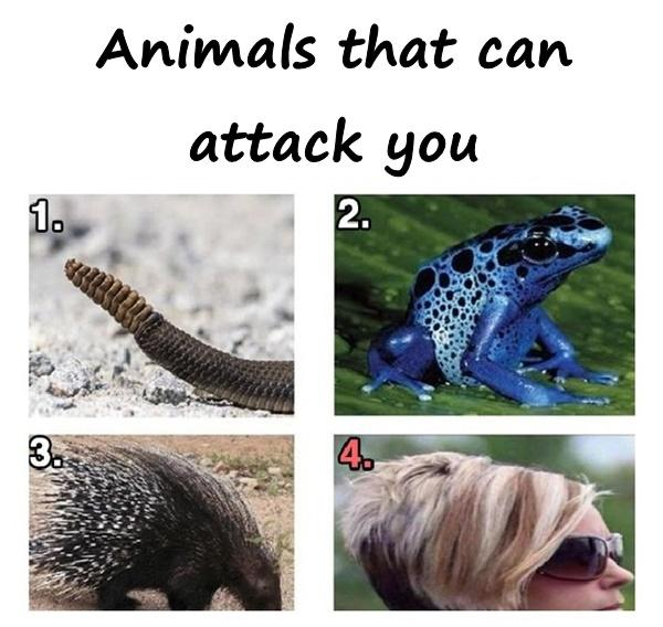 Animals that can attack you