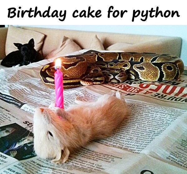 Birthday cake for python