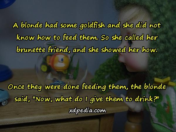 A blonde had some goldfish and she did not know how to feed them. So she called her brunette friend, and she showed her how. Once they were done feeding them, the blonde said,