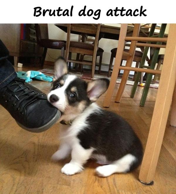Brutal dog attack