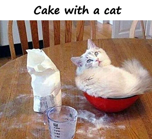 Cake with a cat