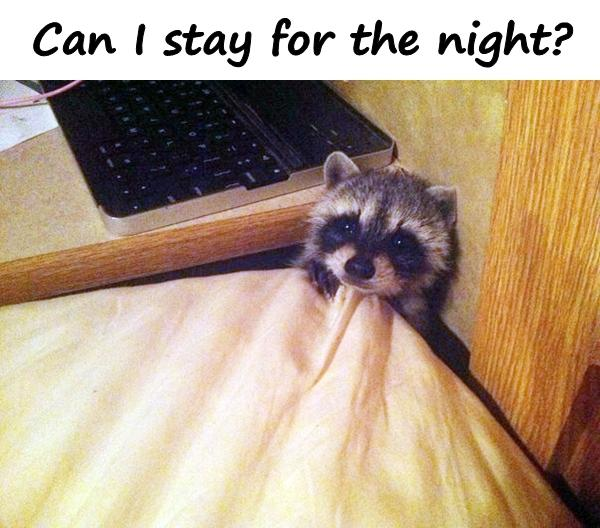 Can I stay for the night?