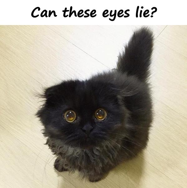 Can these eyes lie?