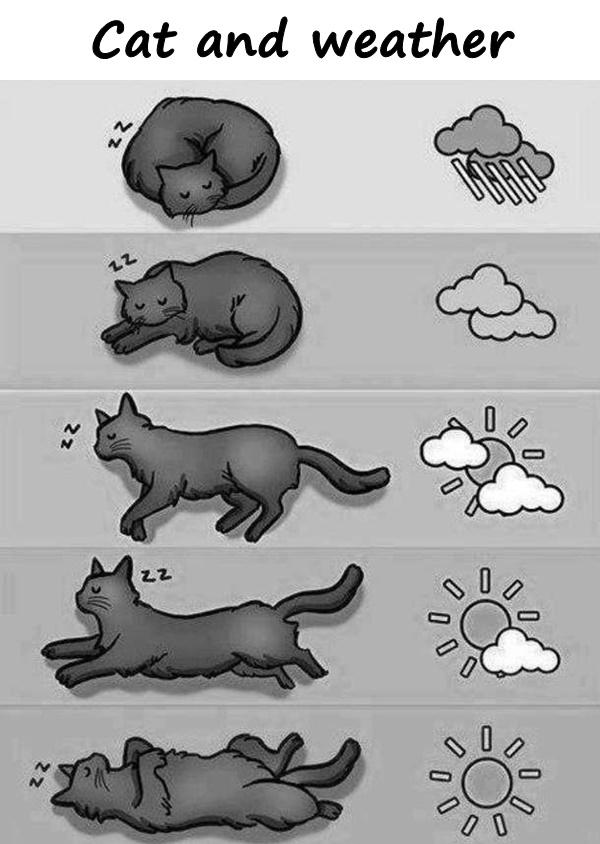 Cat and weather