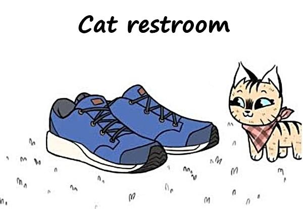 Cat restroom