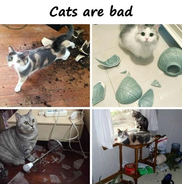 Cats are bad