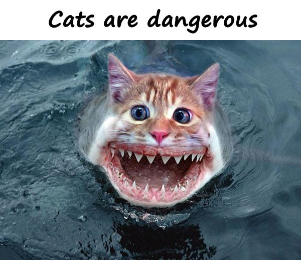 Cats are dangerous
