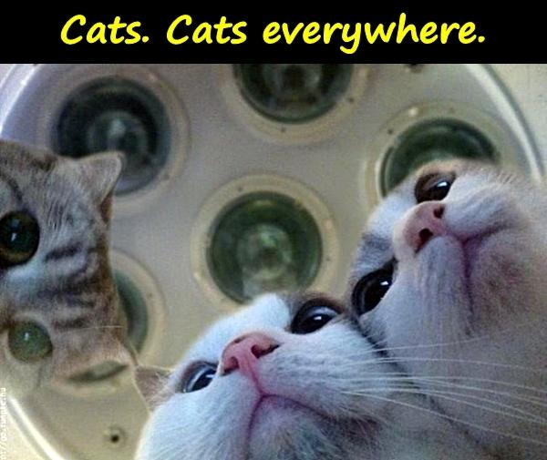 Cats. Cats everywhere.