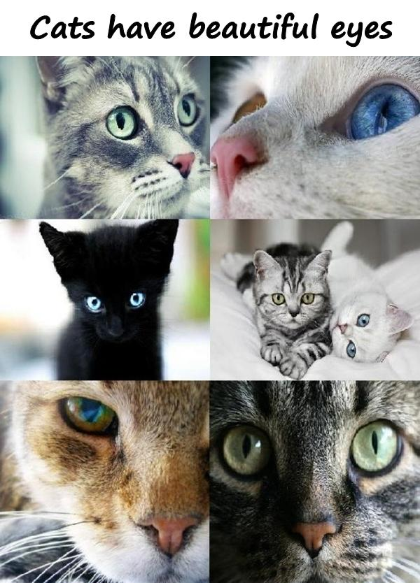 Cats have beautiful eyes