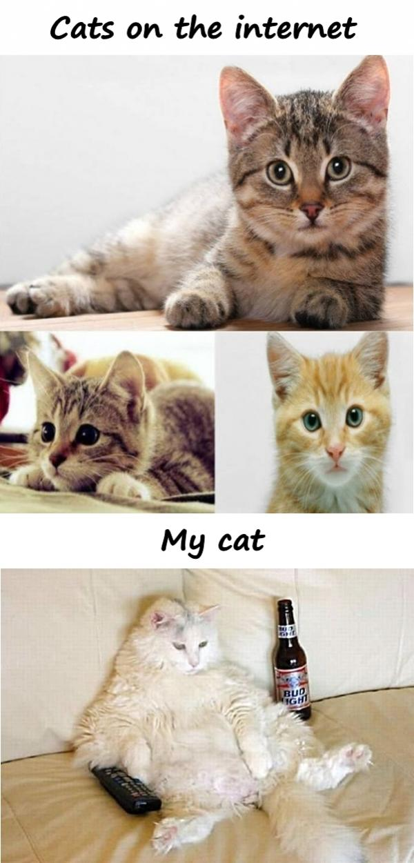 Cats on the internet and my cat