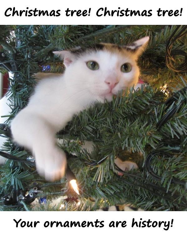 Christmas tree! Christmas tree! Your ornaments are history!