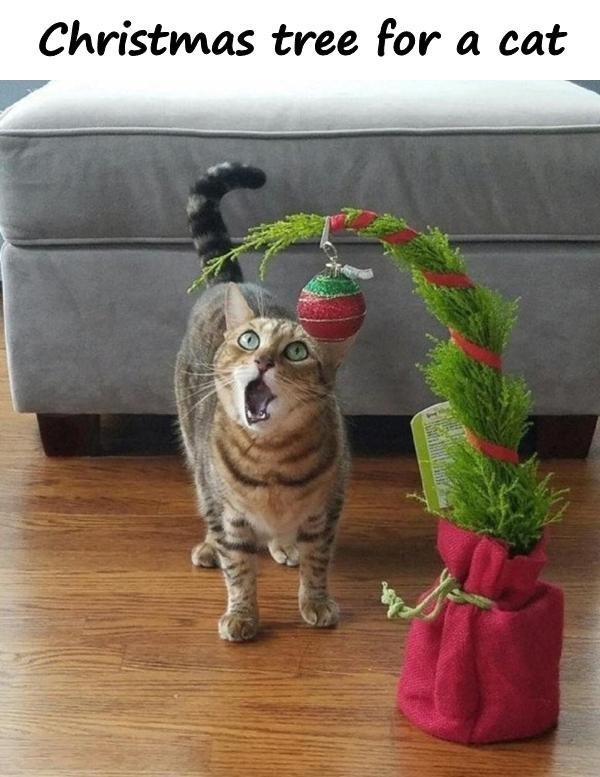 Christmas tree for a cat