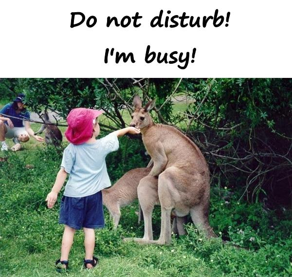 Do not disturb! I'm busy!