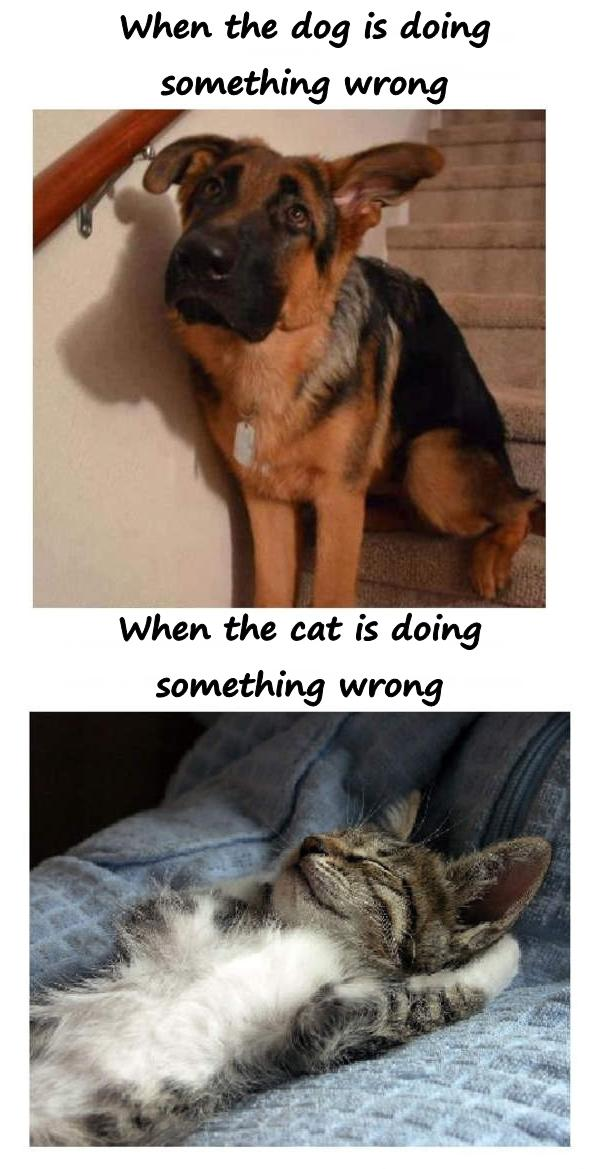 When the dog is doing something wrong. When the cat does something wrong.