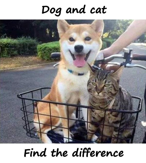 Dog and cat. Find the difference.