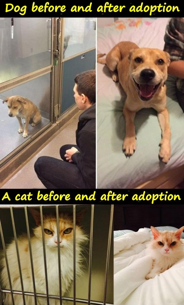 Dog before and after adoption. A cat before and after adoption