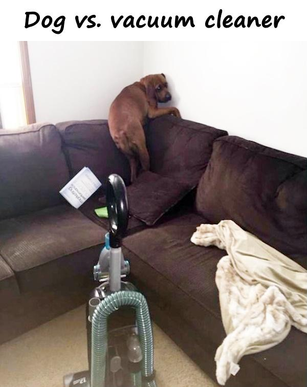 Dog vs. vacuum cleaner