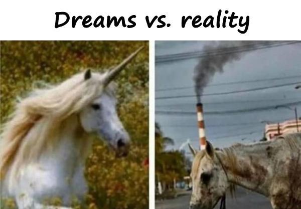Dreams vs. reality