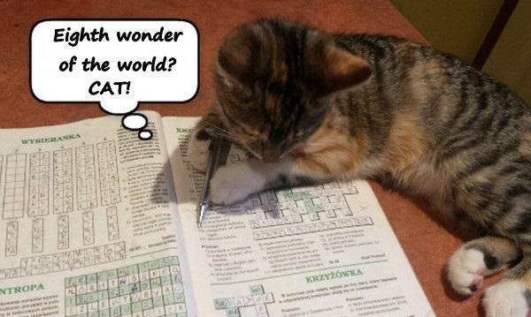 Eighth wonder of the world? cat!