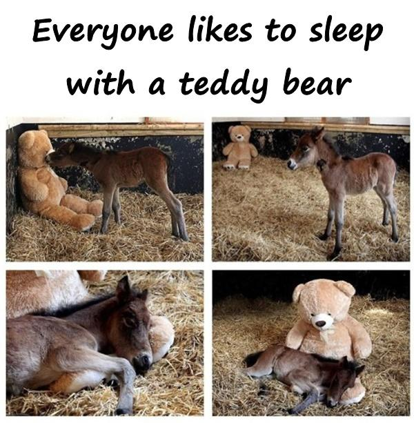 Everyone likes to sleep with a teddy bear