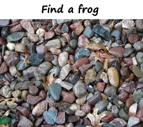 Find a frog