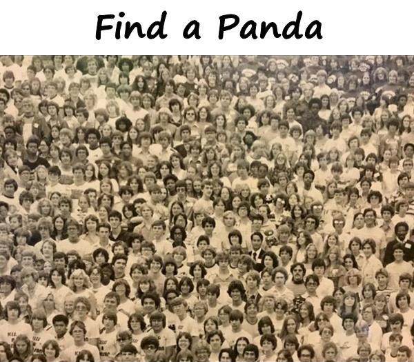 Find a Panda