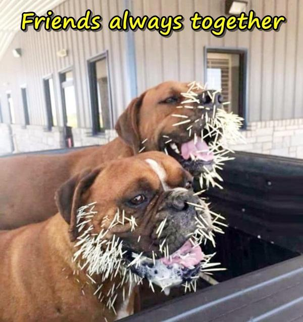 Friends always together