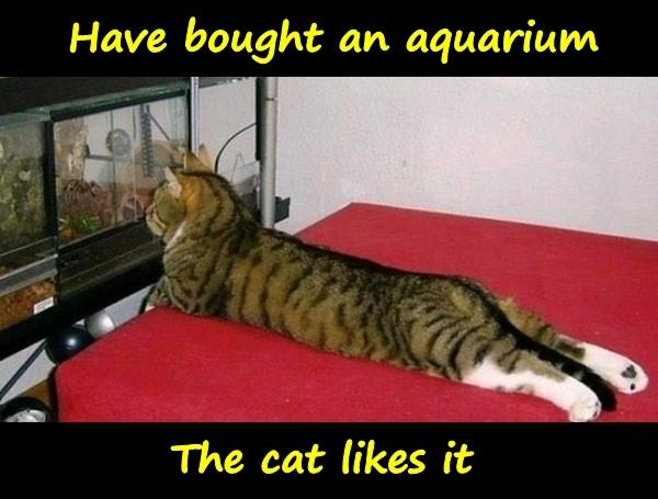 Have bought an aquarium. The cat likes it.